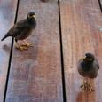 レストランのテラスに集まった鳥
