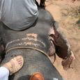 象の背中に乗って