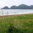 春の南伊豆弓ヶ浜